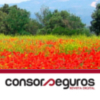 Digital magazine consorseguros 10
